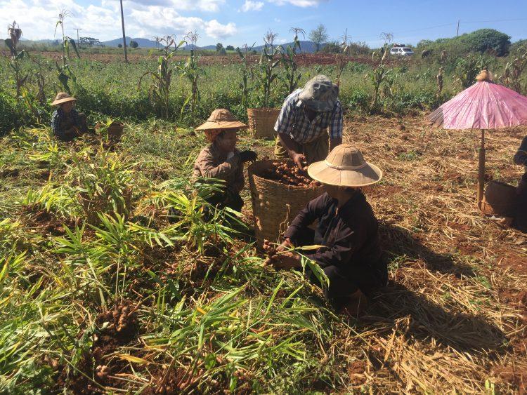 5 - Visite à vélo - Myanmar/Birmanie