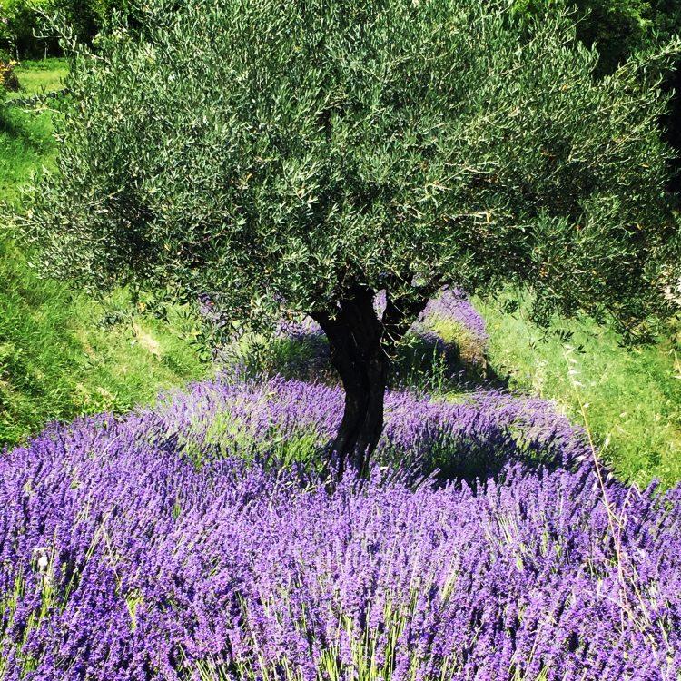 7 - France à vélo - Provence